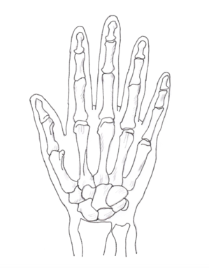 Hand posterior-pen.png
