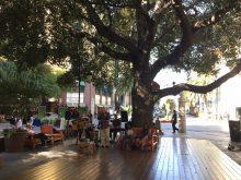 img_4662_tree-at-santana-row