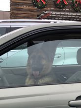 img_5293s_dog_at_wheel2